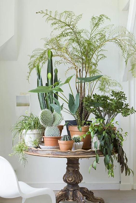 Ideas para decorar tu casa con plantas la quinta de illescas for Ideas para decorar tu casa con plantas